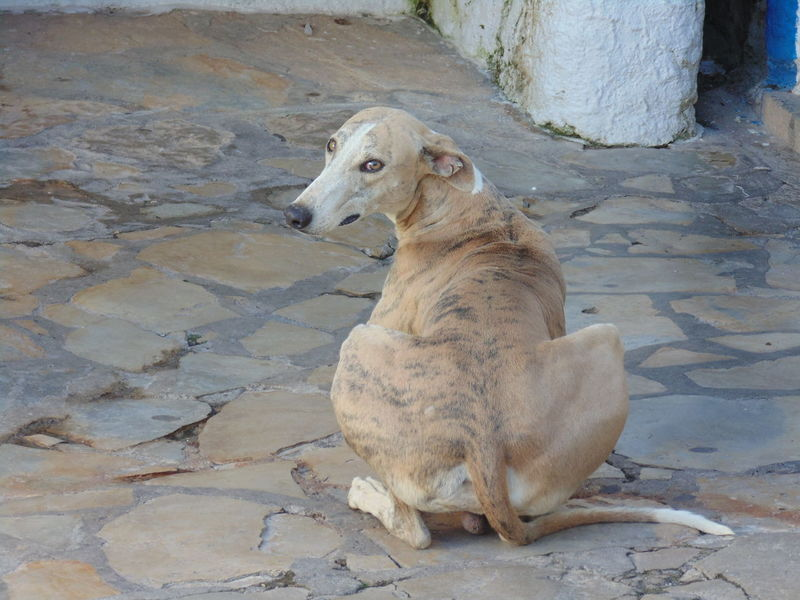 Pet Photography  Animal Themes Dog Domestic Animals Pet