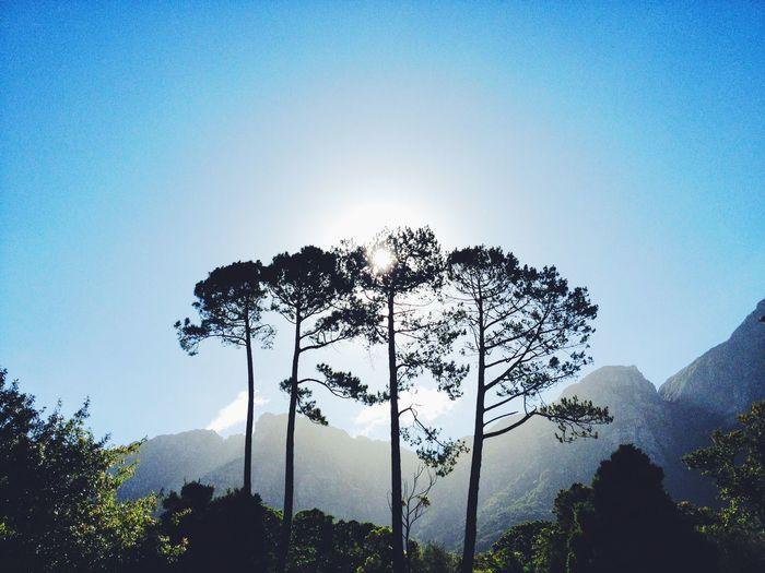 Stone Pines. Tree Table Mountain Get Outside EyeEm Best Shots
