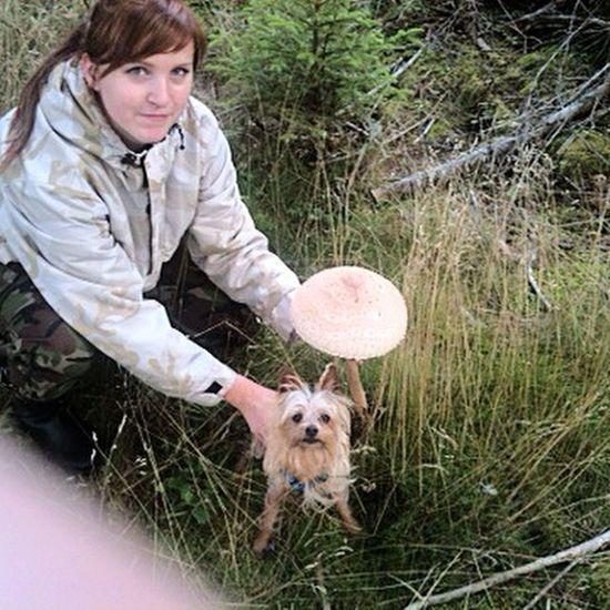 Fido Small BIG Mushroom