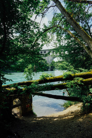 Geneva Rhône Beauty In Nature Built Structure Day Green Color Growth Lake Nature No People Outdoors Park Plant Switzerland Tranquil Scene Tranquility Tree Water