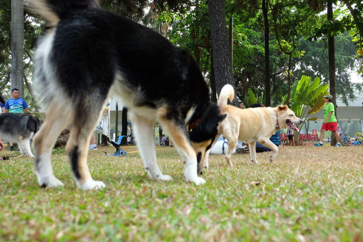 Dogs in Car Free Day Jakarta Animal Themes Animal Pets Dog One Animal Land Motion Day Selective Focus