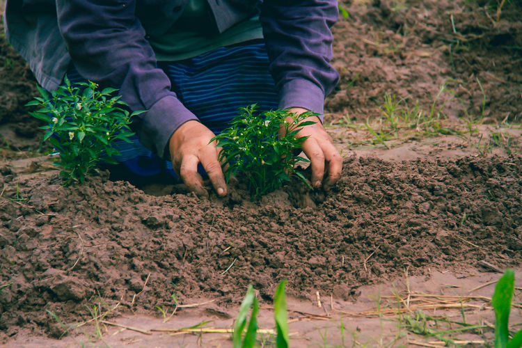 Midsection of woman planting plants in soil