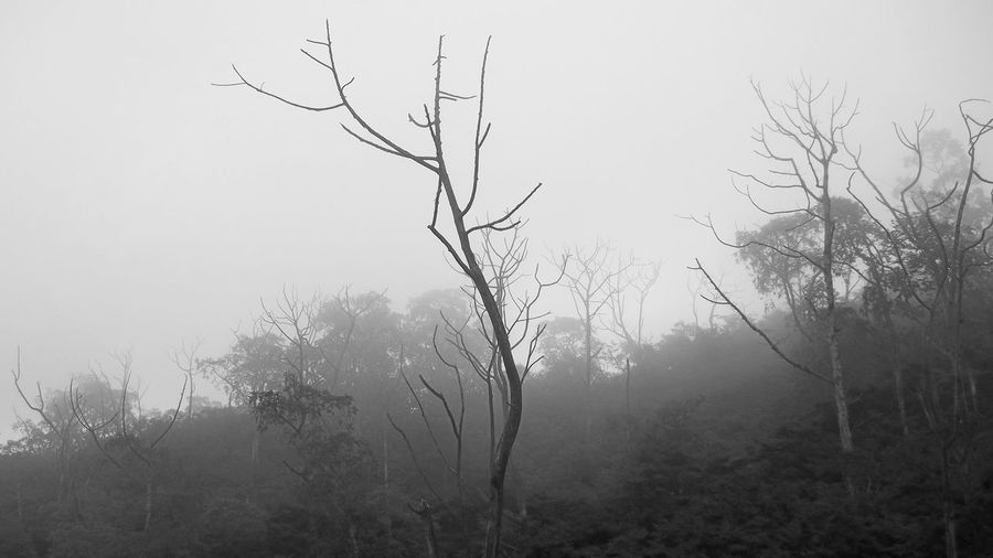 Misty Forest Misty Misty Day Bare Tree Beauty In Nature Branch Day Fog Landscape Mist Misty Forest Misty Lanscape Misty Morning Misty Mornings Misty Mountains  Nature No People Outdoors Plant Rijall Rijall Blues Rijallblues Sky Tranquil Scene Tranquility Tree