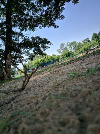 Soil Dead Branch Land Scape Tree Sky