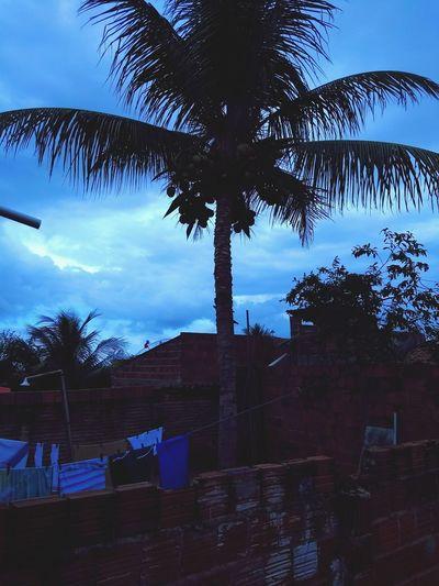 Pra hoje: sorrisos bobos, uma mente tranquila e um coração cheio de paz. Tree Palm Tree Sky Cloud - Sky