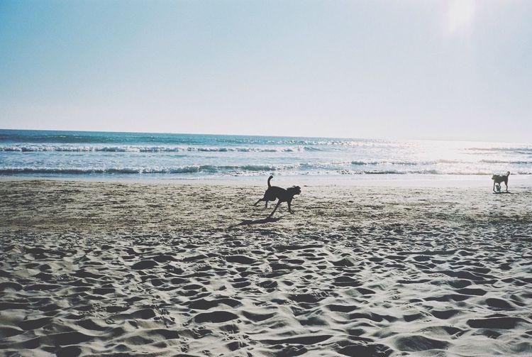 35mm Film Film Kodak Portra Sitges Beachphotography Dog Run Everyday Joy Winter Sunshine Relaxing