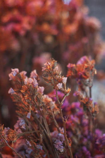Close-up of wilted flowering plant