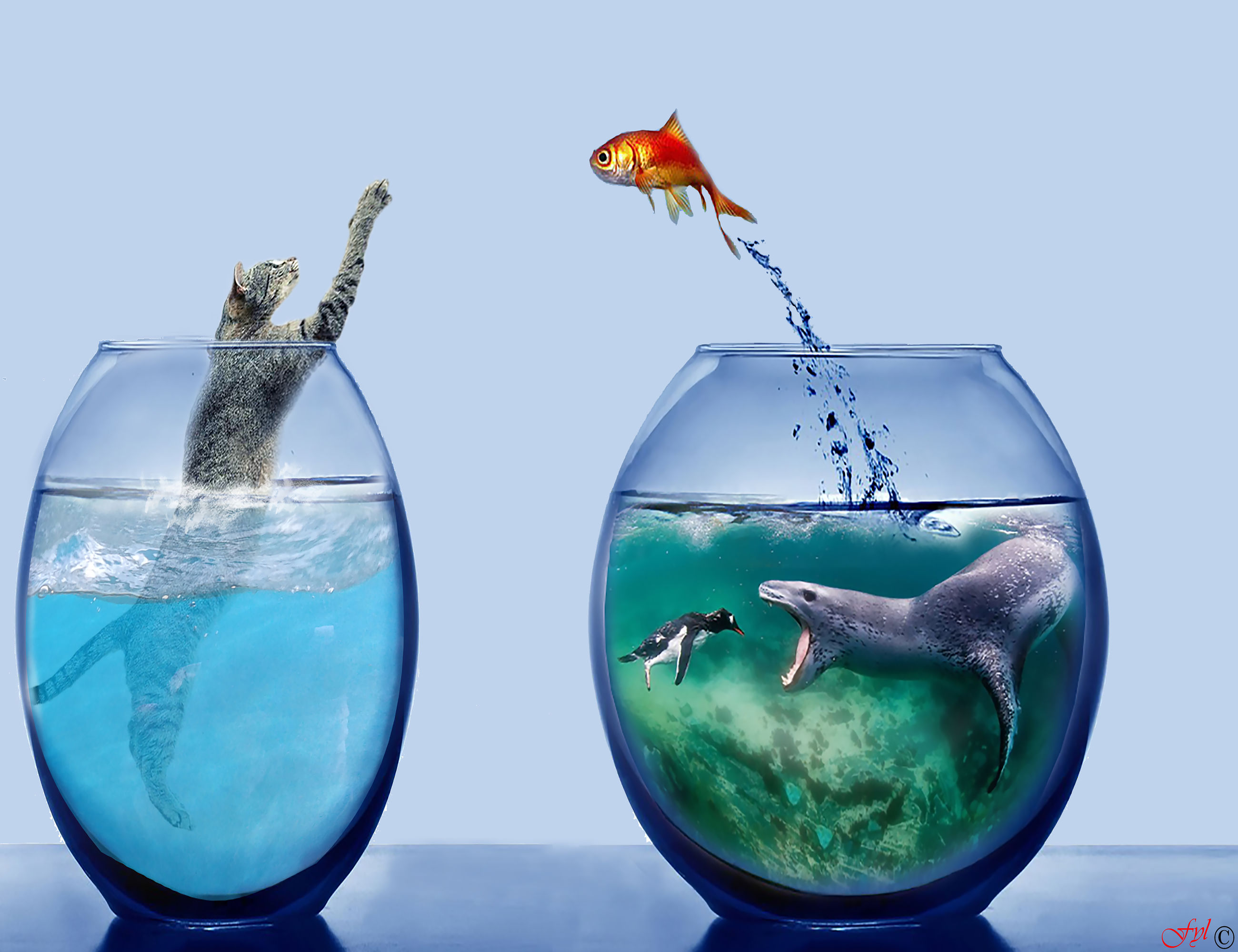water, sea, transparent, group of animals, animal themes, studio shot, animal, fishbowl, nature, blue, fish, no people, animal wildlife, goldfish, two animals, vertebrate, animals in the wild, indoors, glass - material, marine, turquoise colored, blue background