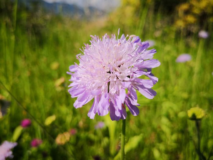 Beautiful Nature Beauty In Nature Nature Photography Nature EyeEm EyeEm Nature Lover Flower Head Flower Nature Reserve Multi Colored Purple Close-up Plant Green Color Wildflower Uncultivated