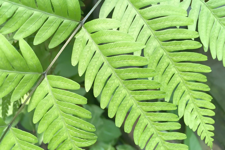 Backgrounds Beauty In Nature Close-up Day Fern Freshness Full Frame Green Green Color Growth High Angle View Leaf Leaves Natural Pattern Nature No People Outdoors Pattern Plant Plant Part Selective Focus
