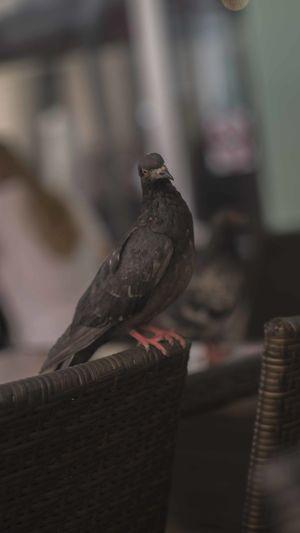 Animal Bird