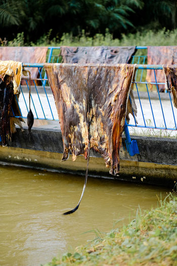 Close-up of dead fish in river