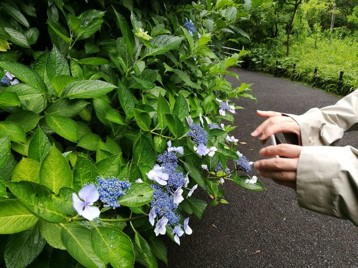Human Hand Human Body Part One Person Outdoors Plant Day Real People Nature People Adults Only Adult Flower Freshness One Man Only Only Men Close-up Parks Outdoor Photography Beauty In Nature Plant Beautiful Nature Arts Culture And Entertainment Nature Beautiful Tree