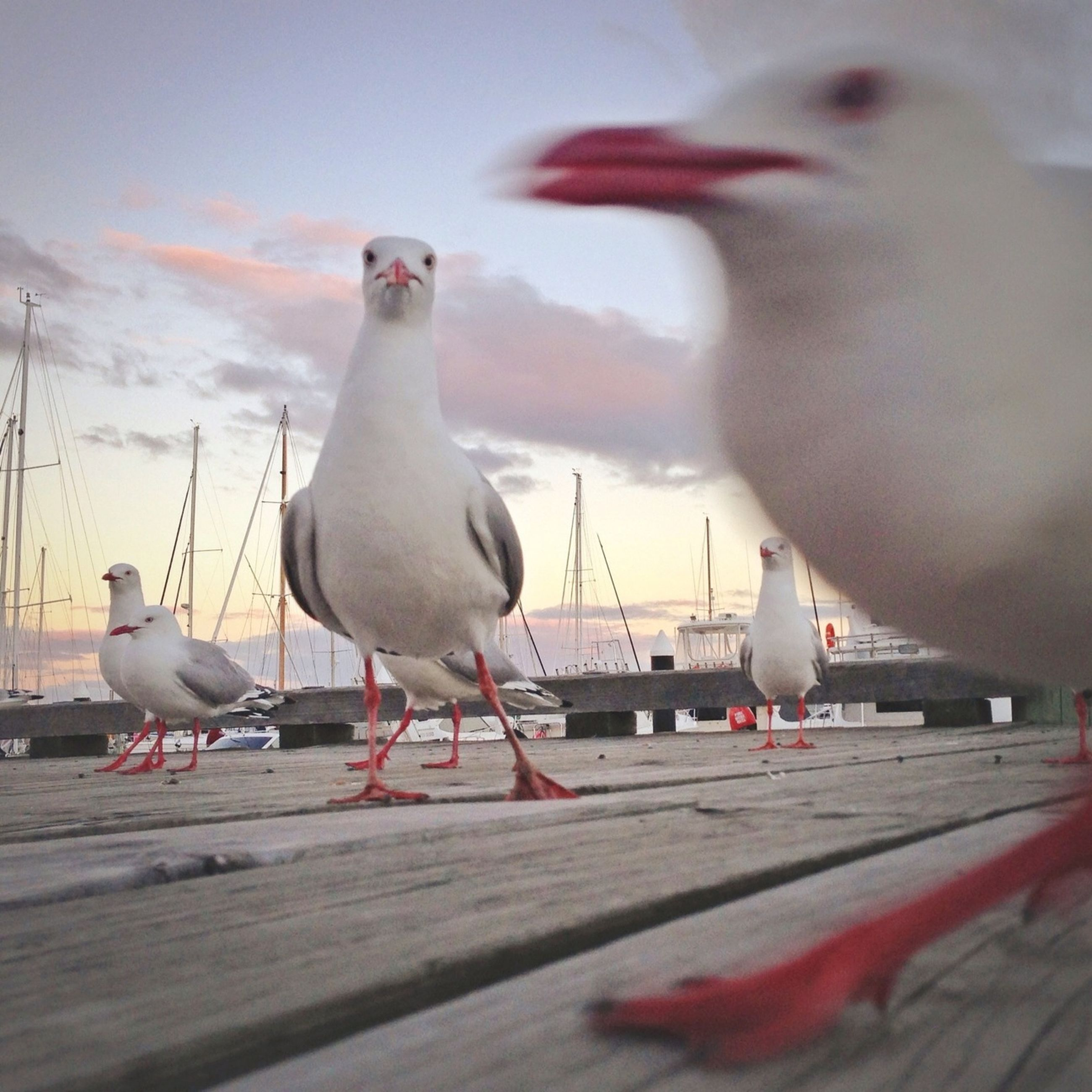 bird, animal themes, seagull, animals in the wild, wildlife, perching, railing, one animal, sky, full length, outdoors, nature, two animals, pigeon, day, focus on foreground, sea, flying, side view, cloud - sky