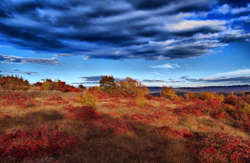 Autumn colors,