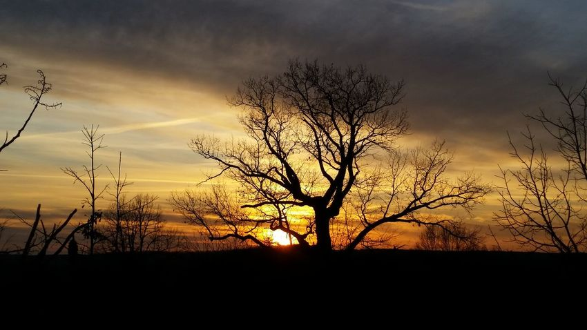 Missouri Ozarks United States Bare Tree Unusal Dramatic Sky Winter Silhouette Sunset Nature Sky Tree Dramatic Sky Dusk Beauty In Nature Landscape Scenics Outdoors Cloud - Sky Shades Of Winter
