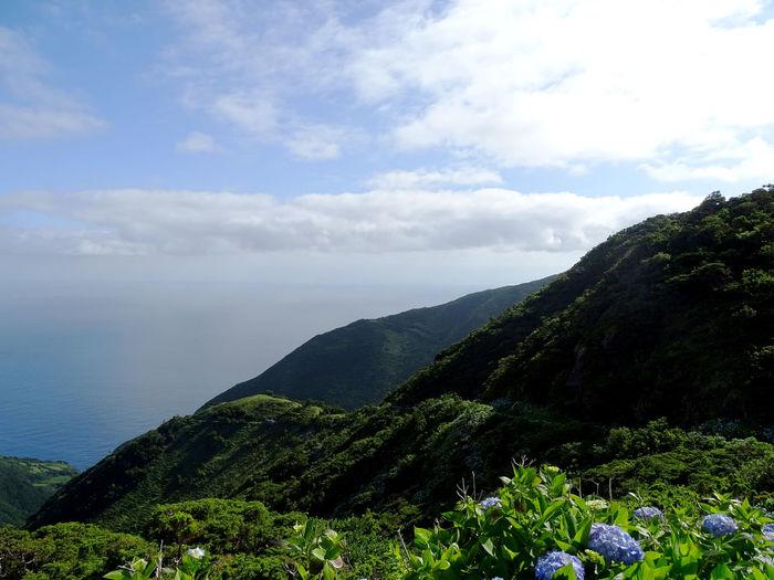 Landscape_Collection EyeEm Best Shots Azores Tree Water Rural Scene Agriculture Sky Landscape Cloud - Sky Plant