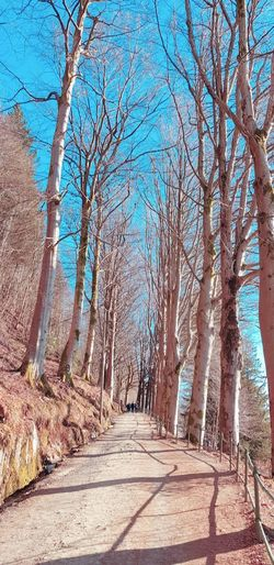 Road amidst bare trees against sky