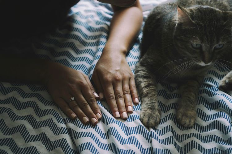 Cropped hands of woman by cat on bed