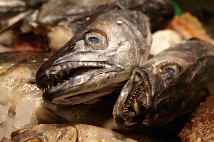 Attendant Balance Barcelona Blood Crisis Deceased Eye Fish Seller Freshness Market Prices Retail  Salmon Scales Sea Food Seller Shopping Store Uniform Weariness Woman