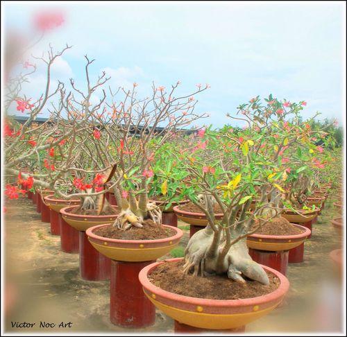 Thailandia 2016 Nong Nooch Tropical Bothanical Garden Pattaya City Victor Noc Art VicNocArt VittNoc VicNoc 8 88 Otto OttoOttoOttantotto Sfumature Artfoto Park Art Photo Scatti  EyeEmNewHere Vittorio Nocente