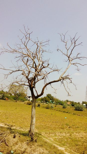 Trees in the summer.without leaves No People Nature Outdoors Beauty In Nature Tree