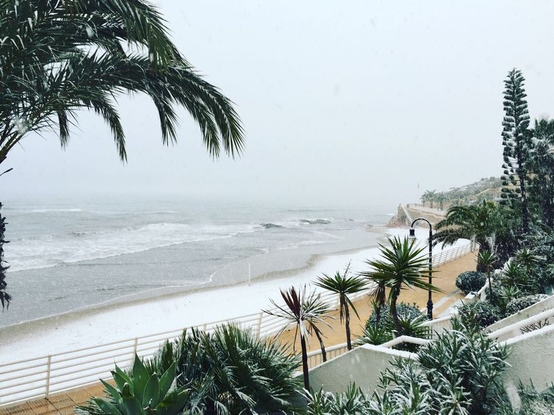 But of a Surprise this Morning to Wakeup to Snow ❄ Snow On The Beach in the Murcia region of SPAIN 🇪🇸 where apparently it Never Gets Cold and it Never Snows Grey Sky Rough Sea White Beach Snow On Palm Tree 🌴 i prefer the Sunshine ☀️