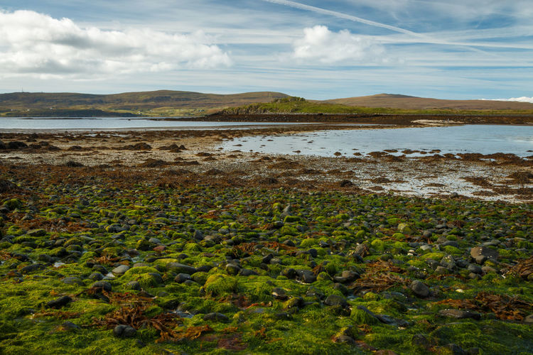 Green algae on stones and rocks at Claigan coral beach visible at low tide. - Isle of Skye, 2017 Green Color Scotland Green Algae On Rocky Seashore Green Algae Loch Dunvegan Claigan Claigancoralbeach Isle Of Skye Outdoors Landscape Non-urban Scene Growth Mountain Environment Day No People Beach Plant Sea Tranquility Nature Land Tranquil Scene Cloud - Sky Beauty In Nature Scenics - Nature Sky Water EyeEm Best Shots EyeEm Nature Lover