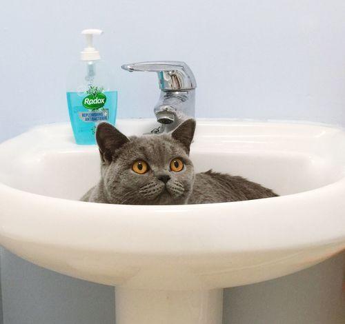Cat♡ Grey Cat British Shorthair Strange Cat