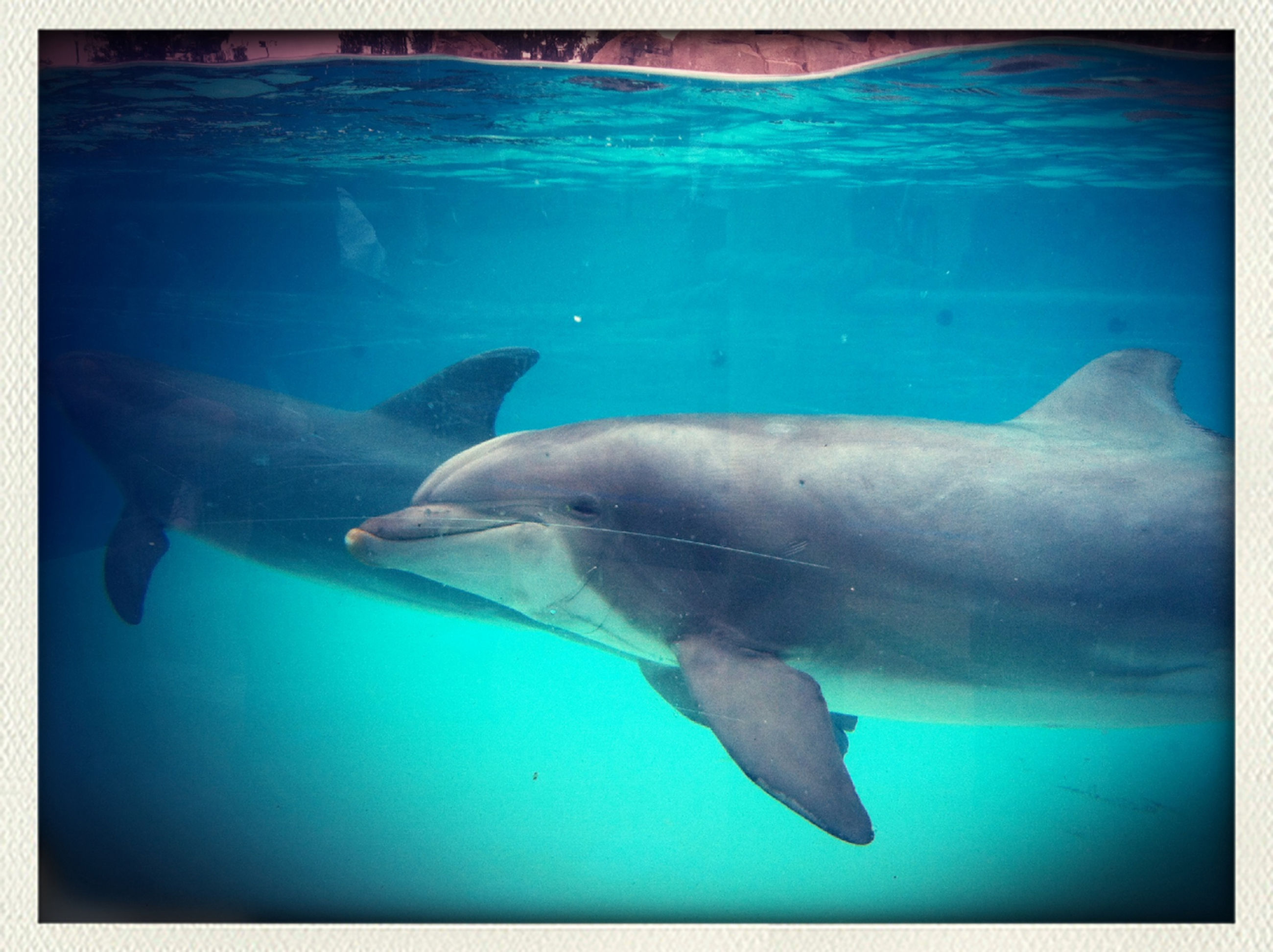 animal themes, swimming, underwater, water, animals in the wild, fish, sea life, wildlife, one animal, sea, blue, undersea, aquarium, dolphin, nature, zoology, aquatic, full length, animals in captivity, auto post production filter