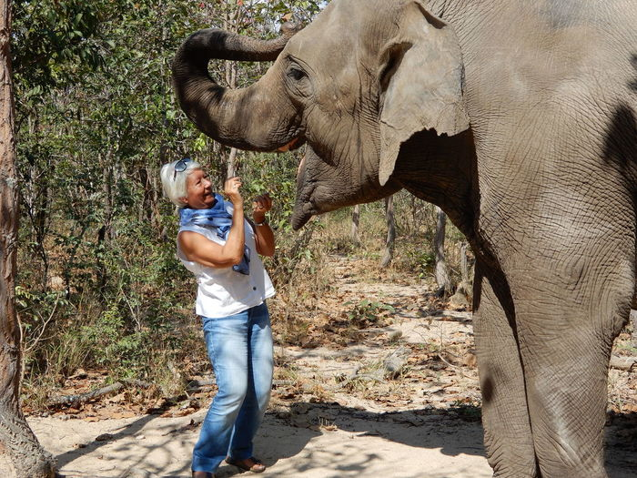 Smiling woman feeding elephant