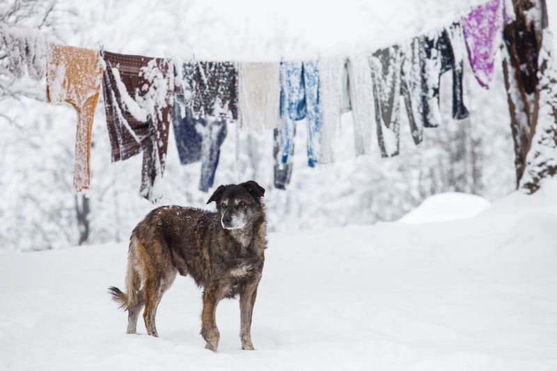 Dog in a cold winter day from Brasov area, Romania. Freezing Standing Winter Animal Animal Themes Canine Clothes Cold Temperature Dog Dogslife Domestic Mammal No People One Outdoors Outside Pet Pets Portrait Single Snow Snow Covered White