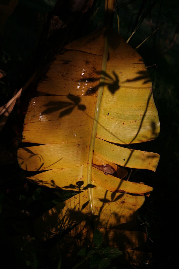 HIGH ANGLE VIEW OF YELLOW LEAVES ON FIELD DURING NIGHT