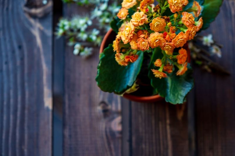 Orange and Brown Wooden Wood Wallpaper Background Summer Spring Blooming Flower Blooming Bloom Flowering Plant Flower Plant Vulnerability  Beauty In Nature Freshness Flower Head Close-up Focus On Foreground Day Nature Wood - Material
