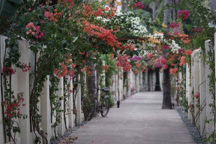Travel Traveling Architectural Column Architecture Beauty In Nature Day Diminishing Perspective Direction Fence Flower Flowering Plant Focus On Foreground Footpath Freshness Gili Trawangan Growth In A Row Leaf Nature No People Outdoors Plant The Way Forward Tourism Tree
