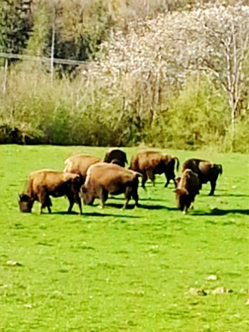 Headin East on The Cascade Trail Were the Buffalo roam Check This Out