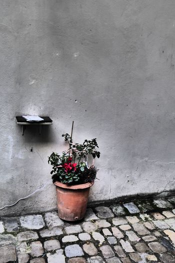 Purplesnail Regensburg Architecture Day Flower Growth Nature No People Outdoors Plant Potted Plant Szene