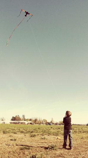 Freedom Flying Boyhood Kiteflying Childhood