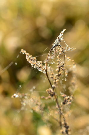 Animal Themes Animals In The Wild Beauty In Nature Close-up Day Fragility Freshness Growth Nature No People One Animal Outdoors Plant Spider Spider Web Water Web