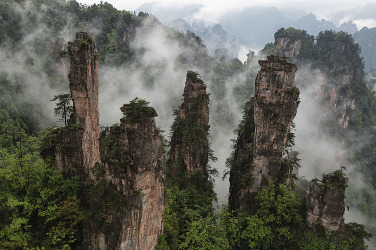 Trees growing on rock formations in forest against sky