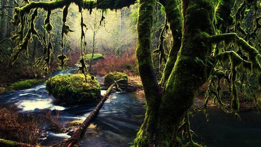 En algun recondito lugar de este planeta.. Hugging A Tree