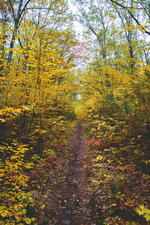 Leading Lines Path Red Fall, Autumn, Leaves, Nature, Landscape Seaon Season Changing Yellow