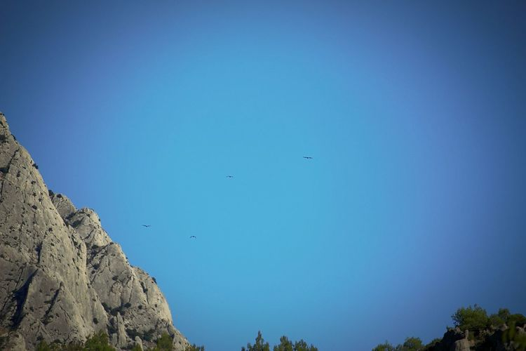 Bird Bird Of Prey Tree Clear Sky Flying Astronomy Mountain Blue Vulture Pinaceae