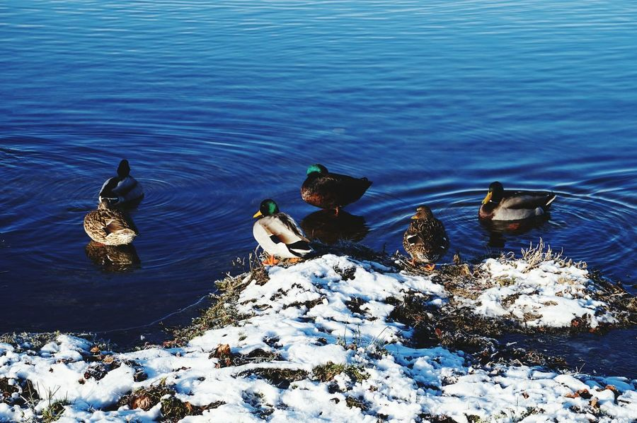 quackers EyeEmNewHere Eye4photography  Eyemphotography Snow White EyeEm Selects High Angle View Water Nature No People Outdoors Day Beach Beauty In Nature