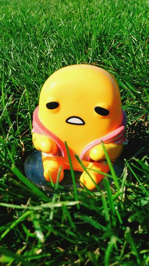 Grass Yellow Green Color Close-up Grassy Vibrant Color Plant Growth Field Day Full Frame Outdoors Focus On Foreground No People Symbol EyeEmBestPics Gudetama Funkopopaddict Funkofunatic Surface Level Grassland Grass Yellow Color Bacon&egg Baconwrapped