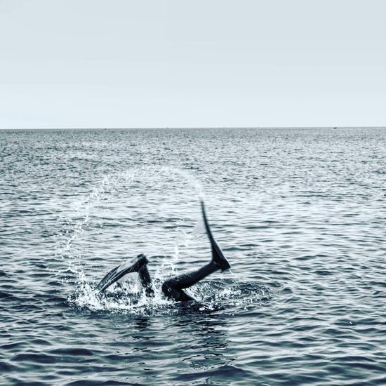 Selulup 😂 🏊🏾 Sea Water Jumping Nature Dolphin Outdoors Sea Life Clear Sky Beauty In Nature No People Swimming Animal Fin Seajava Jawatimur INDONESIA