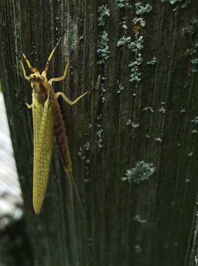 Mayfly Bug Bugs Bugs Life Insect Fly Insect Photography Insects  Insects Collection Nature