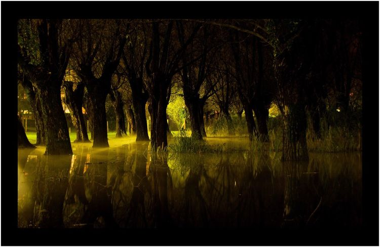Lago Di Endine Esondazione Forest Nature Tree No People Outdoors Beauty In Nature Nocturne Water Reflections Greenlight