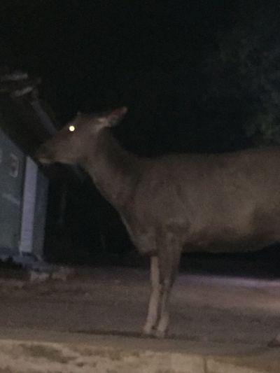 One Animal Mammal Domestic Domestic Animals Pets Vertebrate Night