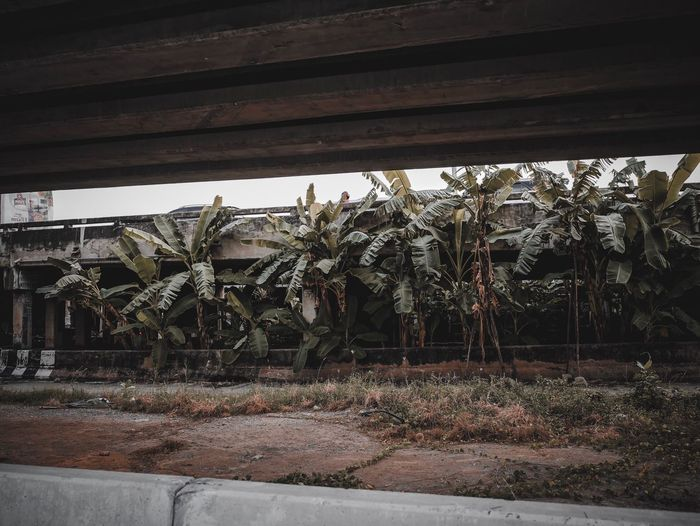 Plants by abandoned building